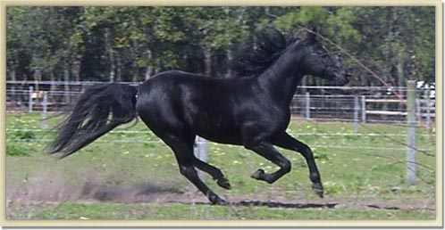 Moonpie Galloping